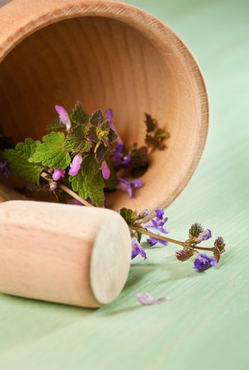 Fresh herbs in a wooden mortar on a mint wooden table