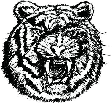 hand drawn, sketch, cartoon illustration of tiger