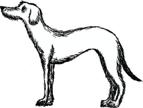 hand drawn, cartoon, sketch illustration of deerhound