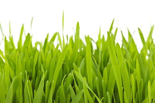 Green grass blades border