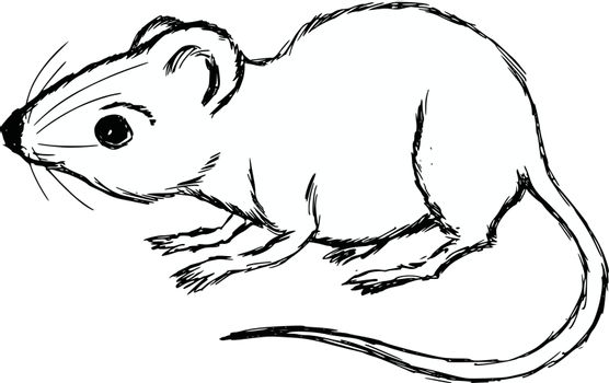 hand drawn, cartoon, sketch illustration of house mouse
