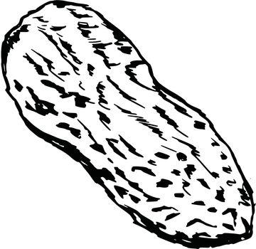 hand drawn, cartoon, sketch illustration of peanut