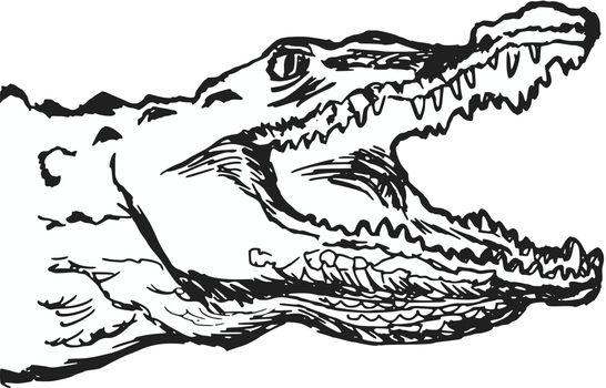 hand drawn, cartoon, sketch illustration of crocodile