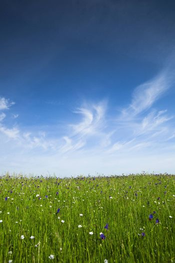 Beautiful green meadow with a great blue sky