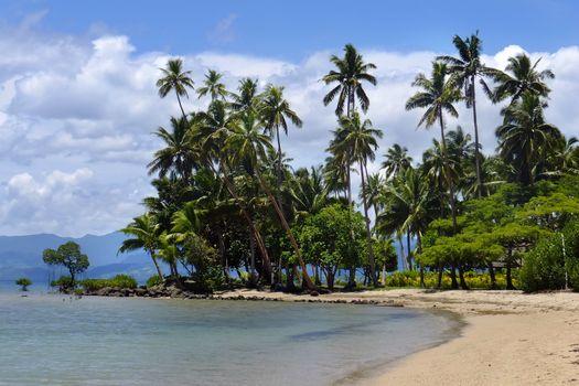 Palm trees on a beach, Vanua Levu island, Fiji