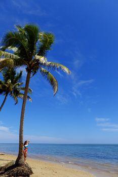 Palm tree on a beach, Vanua Levu island, Fiji