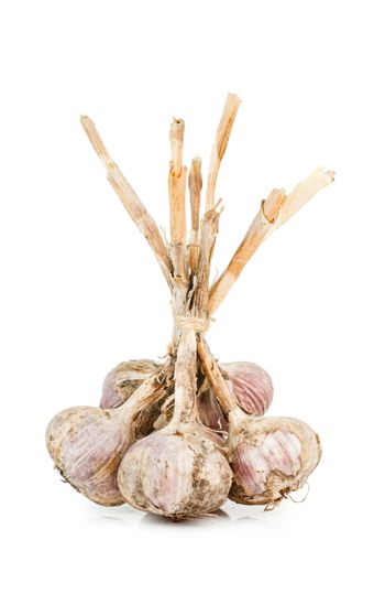 Closeup view of bunch of garlic isolated on white background.