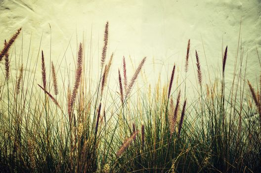 the grass is a vintage photo. With white background