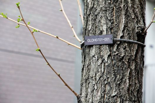 The numerical labels on the tree in Tokyo Japan.