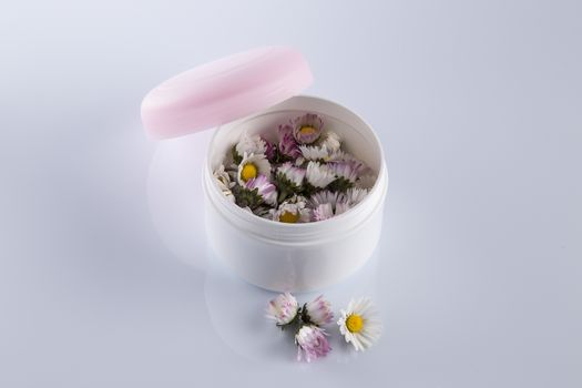 Daisies or Bellis Perennis in a cosmetic cream box: beauty goes organic