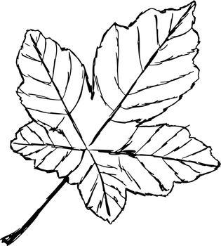hand drawn, sketch, cartoon illustration of yellow leaf