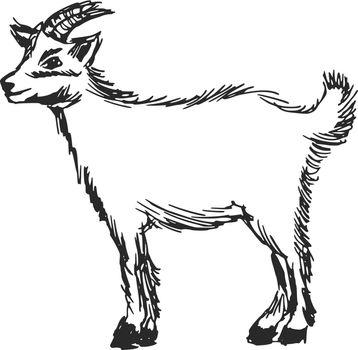 hand drawn, cartoon, sketch illustration of little goat