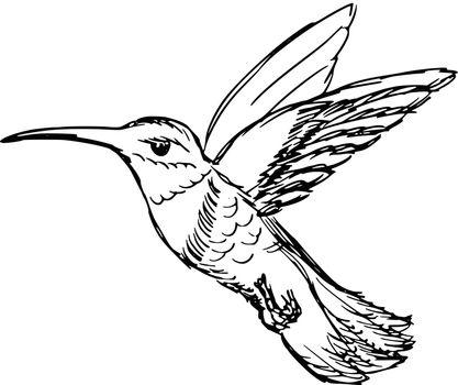 hand drawn, sketch, cartoon illustration of hummingbird