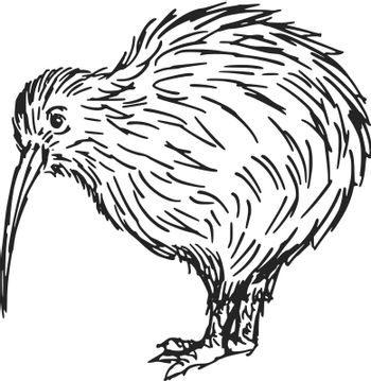 hand drawn, sketch, cartoon illustration of kiwi