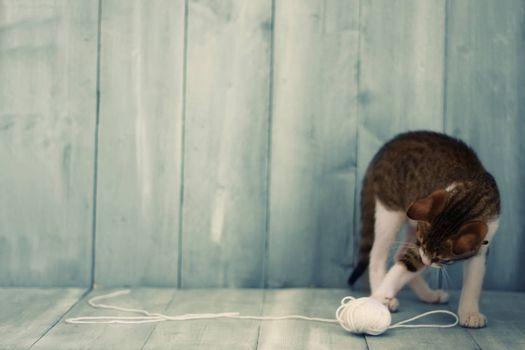 Photo of kitten playing with a wool ball