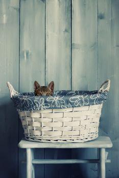 Photo of cute kitten in the basket
