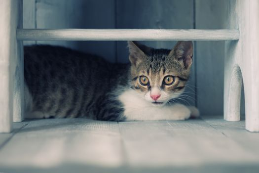 Photo of cute kitten under the bench