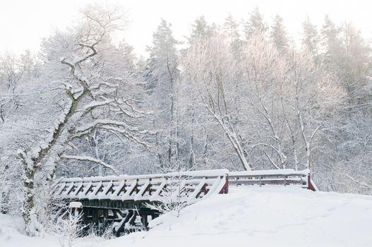 Winter scenery. Fairytale forest, bridge, snowy trees