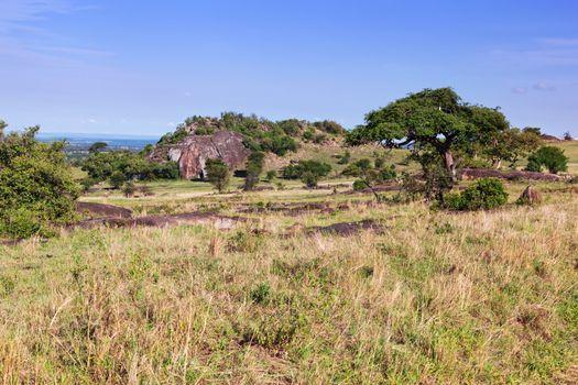 Grassy savanna, bush in Africa. Tsavo West, Kenya.