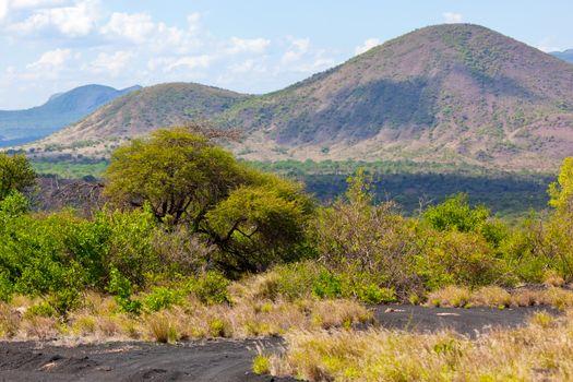Bush and savanna landscape in Africa Tsavo West, Kenya, Africa