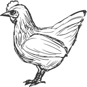 hand drawn, cartoon, sketch illustration of hen