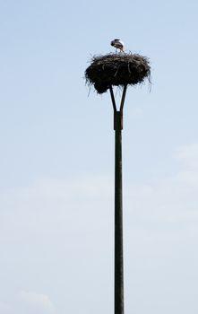 Stork feeding offspring