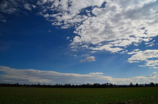 fresh green field with white clouds in the sky