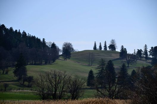natural landscape with grass and trees in the spring