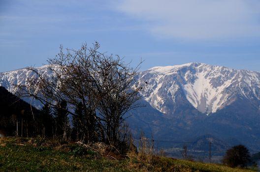 shrub and giant mountain with snow