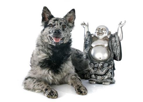 Hungarian dog and bouddha
