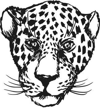 hand drawn, sketch, cartoon illustration of jaguar