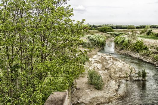 Trees and weeds on the Senio river near Cotignola in Italian countryside