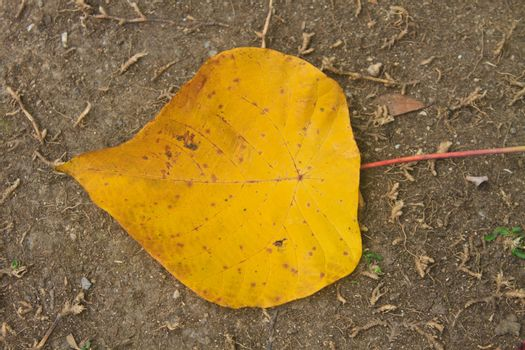 Yellow autumn leaf on ground in forest