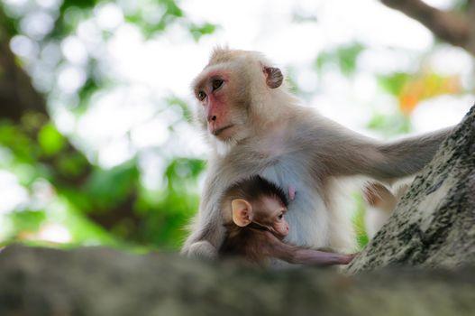 Monkey on a tree dribble