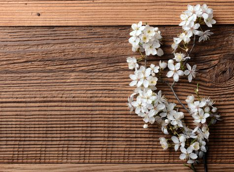 Spring blossom on wooden background