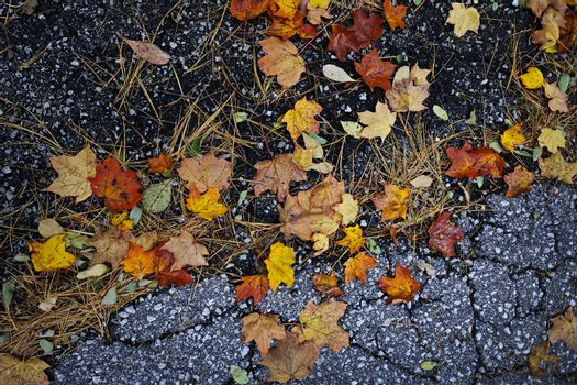 Fall leaves on pavement