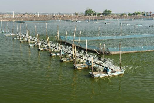 Shrimp Farm near bangkok, Thailand.