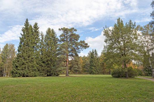 Green glade in old park of Pavlovsk, autumn
