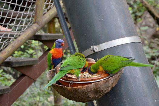 Parrot in Loro park in Tenerife Spain