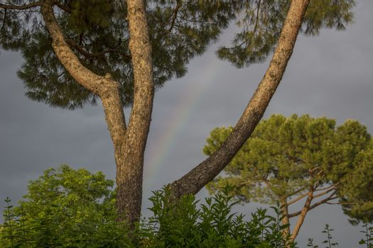 Rainbow between branches of pine tree in Italian village