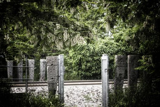 White flowers and green leaves on on gates to railroad