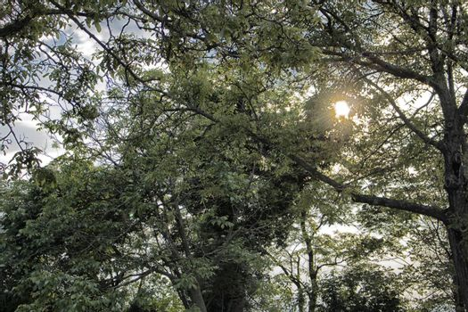 Green leaves on sunlight in Italy
