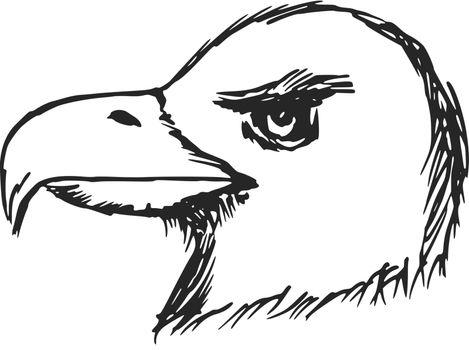 hand drawn, sketch, cartoon illustration of American bald eagle