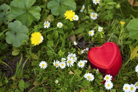 Heart Shape Gift Box in Nature