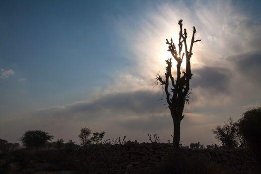 Starburst sunrays Barren Tree Silhouette Stone Hedge clouds Blue Sky