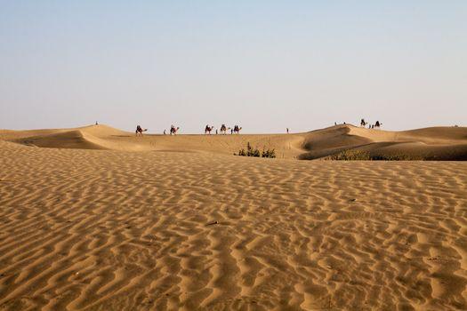 Camel Caravan Horizon Sand dunes Foreground Blue Sky