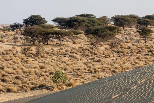Desertscape sand dunes dry shrubs trees horizon