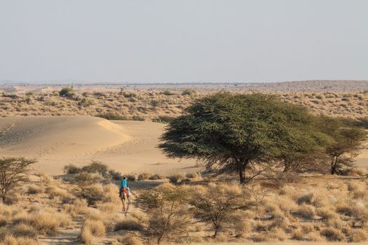 desert landscape green trees dry shrub single camel with  rider