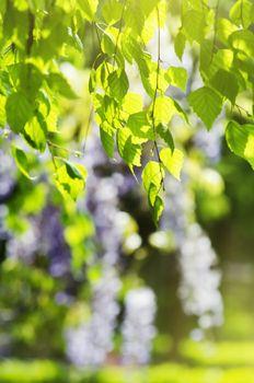 Spring Vitality Leaves