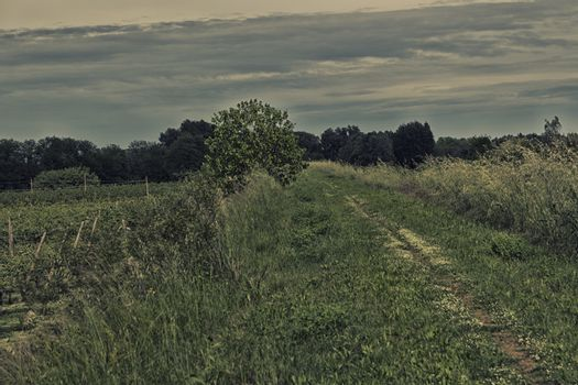 Walking road in the countryside in Italy